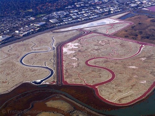 Aerial Photography - 8797 - San Francisco Bay slough