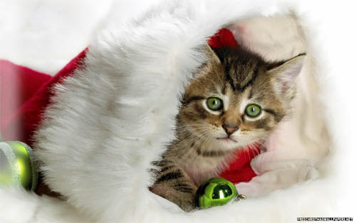 Wallpaper-christmas-kitty in Beautiful Christmas and Winter Wallpapers For Your Desktop