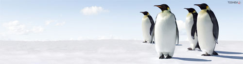 Wallpaper-winter-penguins-triple-monitor in Beautiful Christmas and Winter Wallpapers For Your Desktop