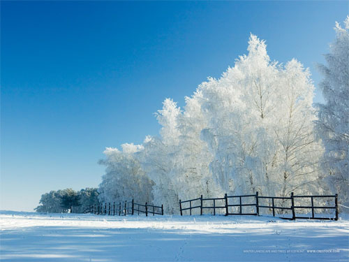 Beautiful Christmas and Winter Wallpapers For Your DesktopWinter Wonderland Wallpaper
