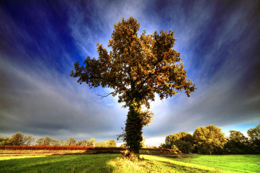 50 Beautiful Examples of Tree Photography