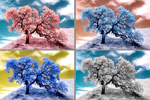 Beyond Visible: 100 Years Of Infrared Photographs