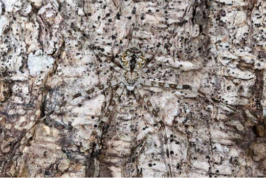Can You See Me? Unbelievable Animal Camouflage Photography