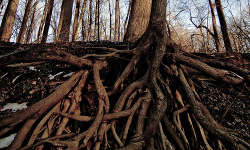Roots in Building Manageable Growth on the Web