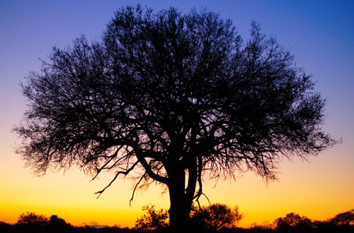 Sunset-tree in Sunsets and Color Palettes Inspiration