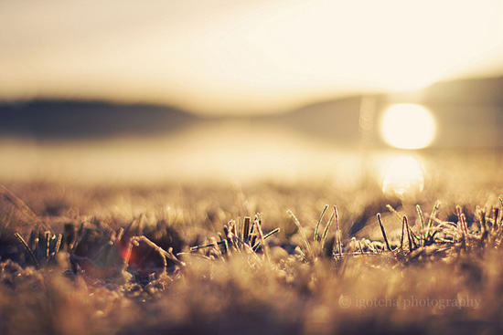 Sunkissed grass
