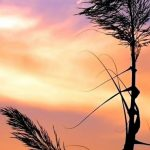 Title: Herb against a colorful sky Creator: Wallpapers Source: I Like Wallpaper.com