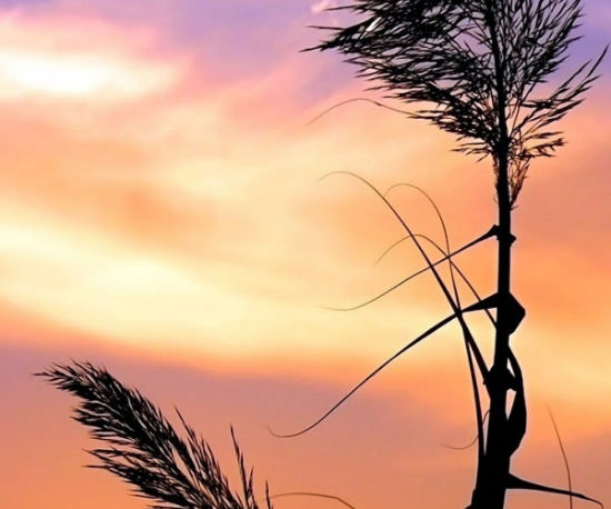 Herb Against A Colorful Sky