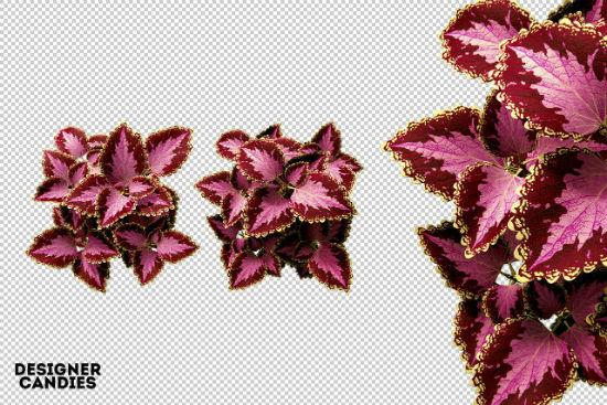 free-png-flower-renders