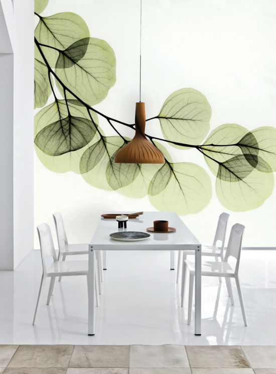 pic2-beyond-light-eucalyptus