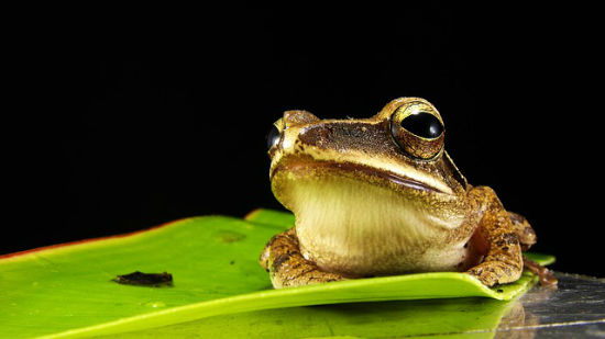 frog-173622_640