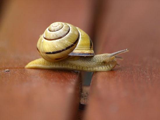 snail-317741_640