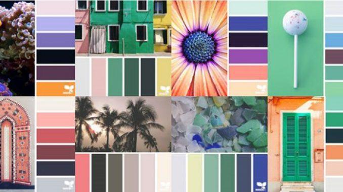 designseeds-640x320