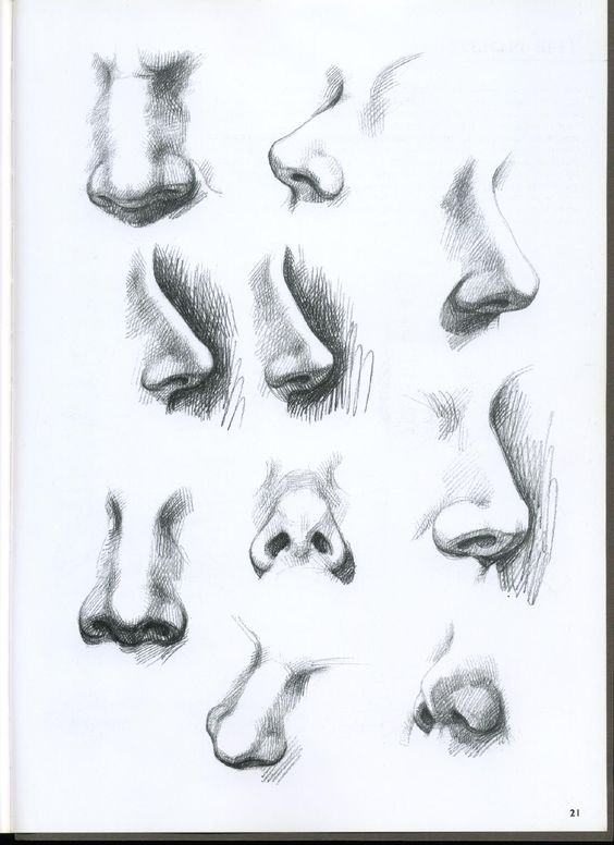 drawings of different kinds of noses