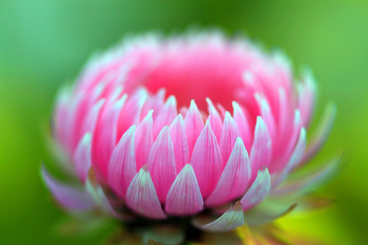 50 Beautiful Examples of Flower Photography - noupe
