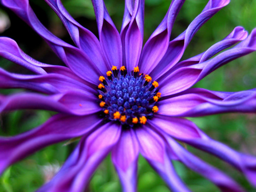 inspiration photography beautiful examples flower