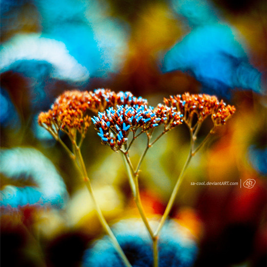50 Beautiful Examples Of Flower Photography Noupe