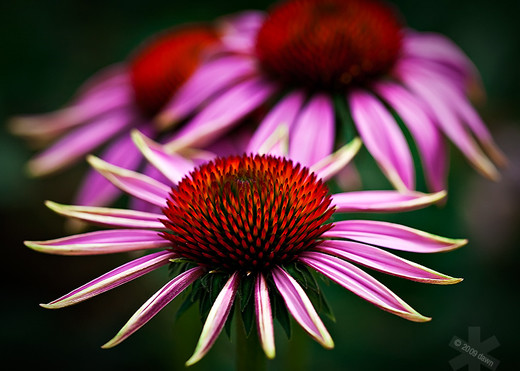 beautiful examples of flower photography  noupe, Natural flower
