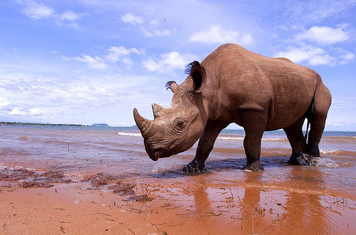 animal-photography-rhino