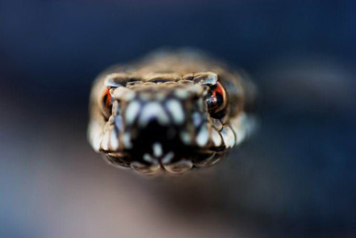 animal-photography-snake