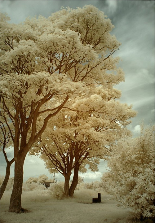 The Park Infrared in Infrared Photography