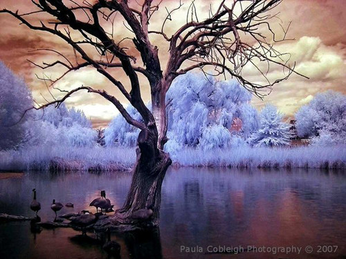 Infrared Pond in Infrared Photography