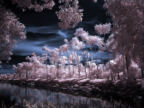 Tropical Garden Infrared in Infrared Photography