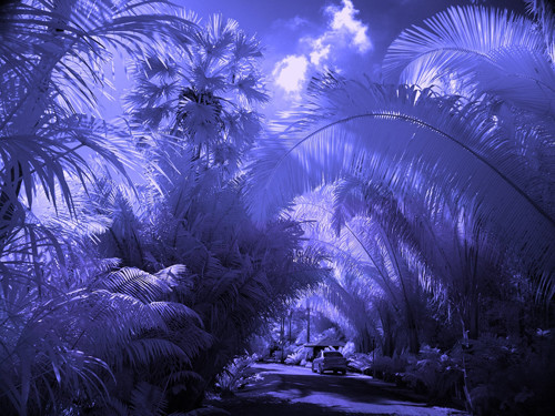 Tropical Paradise Garden in Infrared Photography