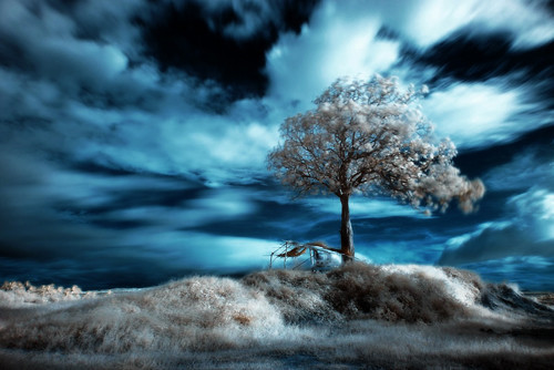 Blue Infrared in Infrared Photography