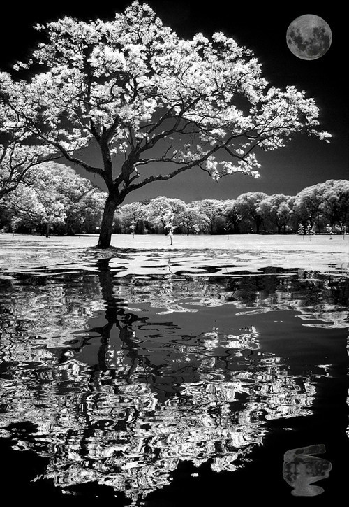 Eyes Do More than See in Infrared Photography