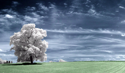 Her World in Infrared Photography