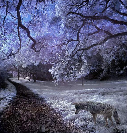 Mystic Woods in Infrared Photography