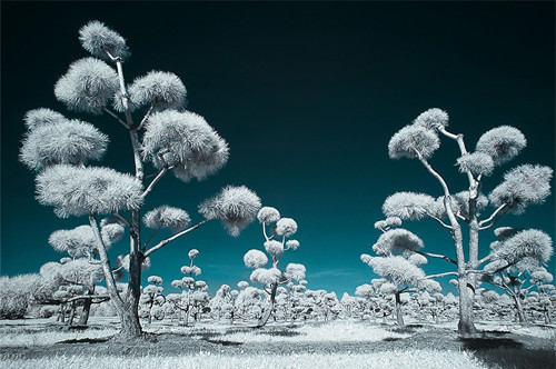 Lapland in Infrared Photography