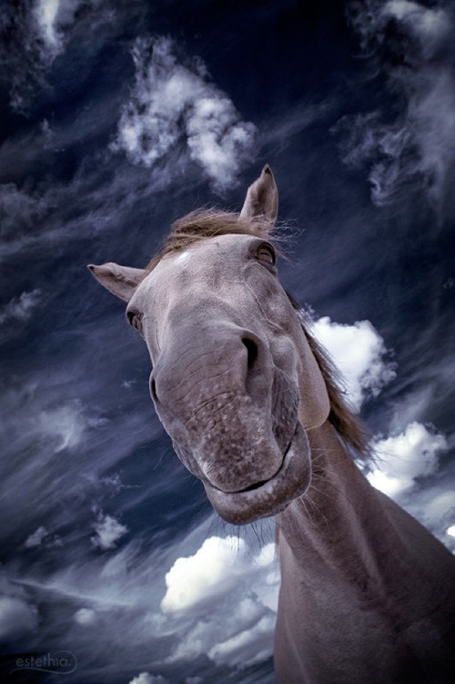 The Horse in Infrared Photography