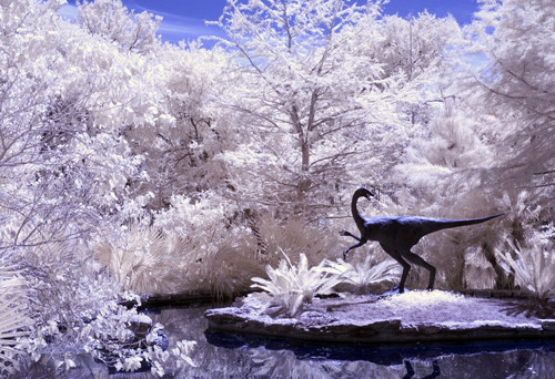 Infrared Jurassic Park in Infrared Photography