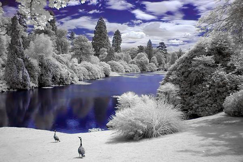 Infrared World in Infrared Photography