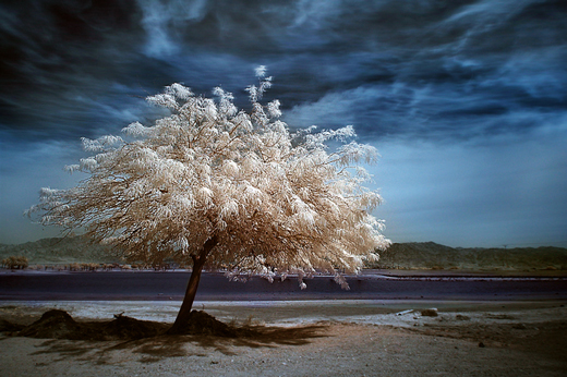 50 Beautiful Examples of Tree Photography - noupe