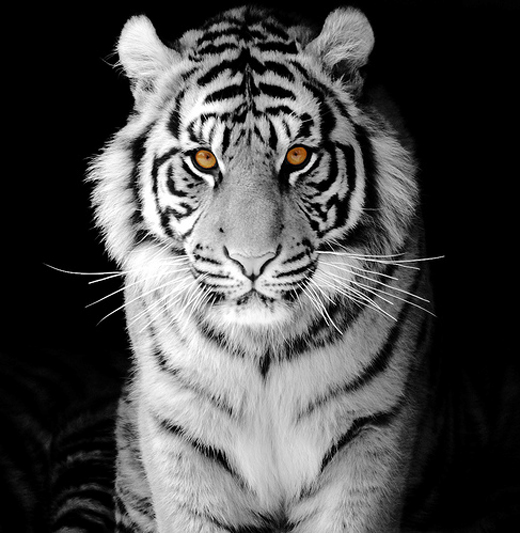 50 Superb Examples of Animal Photography - noupe