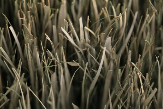 Dried Grass Textures