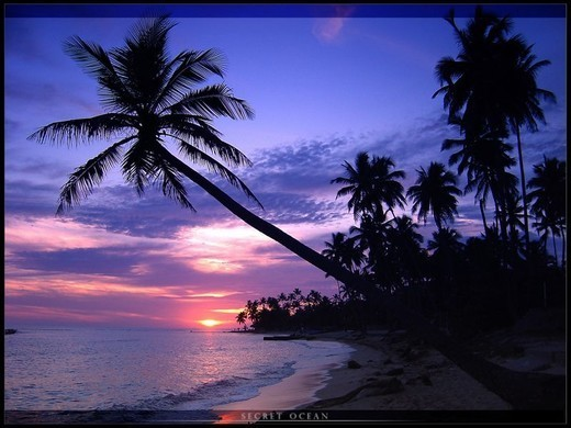 Beautiful beach and palms wallpapers for your desktop noupe - Free palm tree screensavers ...