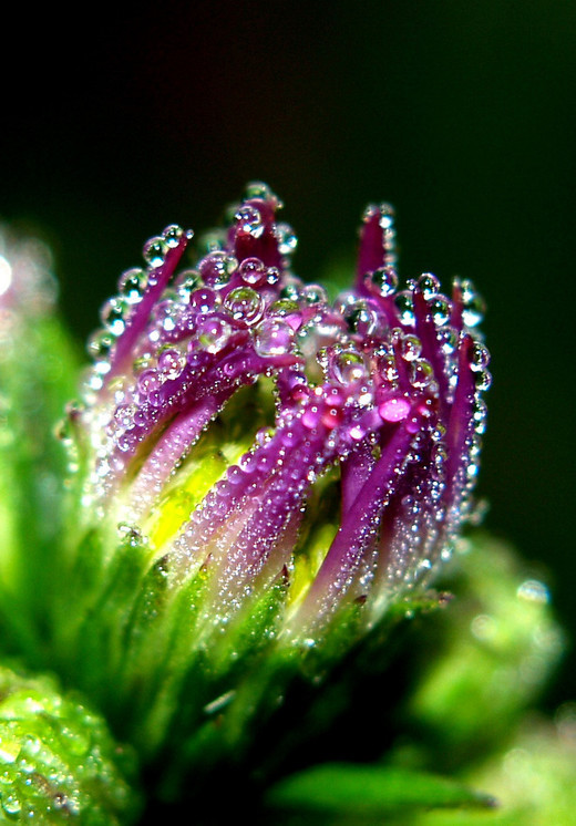 Stunning Morning Dew Photography Noupe