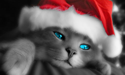 Kitty Santa wallpaper